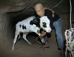 Gaza Tunnels the Lifelines of the population of more than 1.5 millions