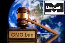 GMO Ban in Kenya